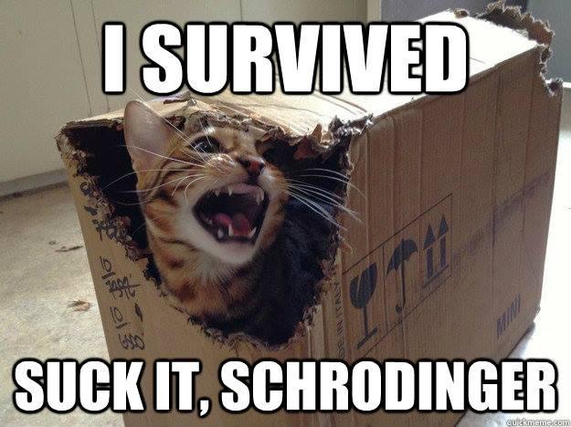 The Cat's Revenge