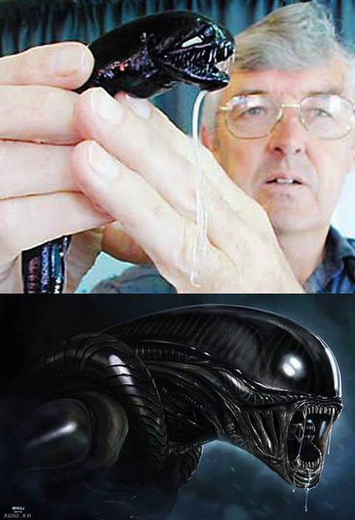 Real Life Alien!